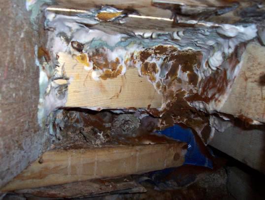Neplacuta la vedere ciuperca de pivnita afecteaza inclusiv zidaria (foto www timberanddampsurveys co uk) - Neplacuta