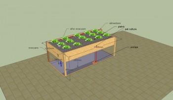 Doua bazine care functioneaza in simbioza, unul pentru legume si plante, altul pentru pesti de consum (imagine aqua-ponics.roblog) - Doua bazine care functioneaza in simbioza, unul pentru legume si plante, altul pentru pesti de consum (imagini aqua-ponics.ro)