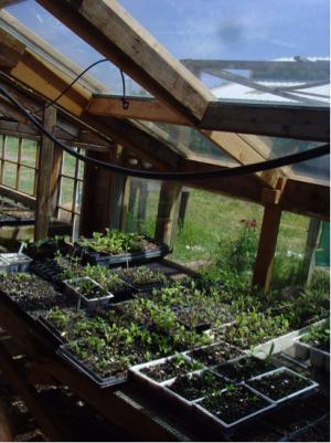 In clima romaneasca, solarul asigura lumina din plin si caldura necesara cresterii majoritatii plantelor aromatice (foto: 2.bp.blogspot.com) - Un solar reprezinta un stil de viata pentru o gospodarie