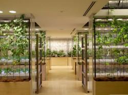 Pasona HQ7 - Cladirea de birouri Pasona HQ din Tokyo