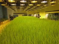 Pasona HQ11 - Cladirea de birouri Pasona HQ din Tokyo