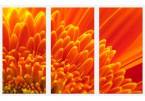 Tablouri set dual view flori - crizantema portocalie - Tablouri set