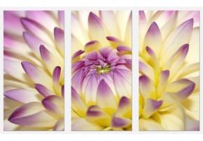 Tablouri set dual view flori - floarea se deschide - Tablouri set