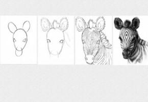 Tablouri set dual view pentru copii lectia de pictura in 4 pasi - Zebra - Tablouri set