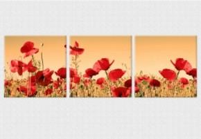 Tablouri set dual view flori - maci salbatici - Tablouri set