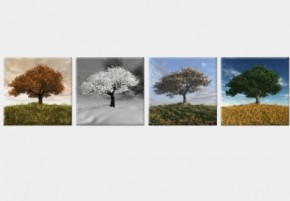 Tablouri set dual view - copaci patru anotimpuri - Tablouri set