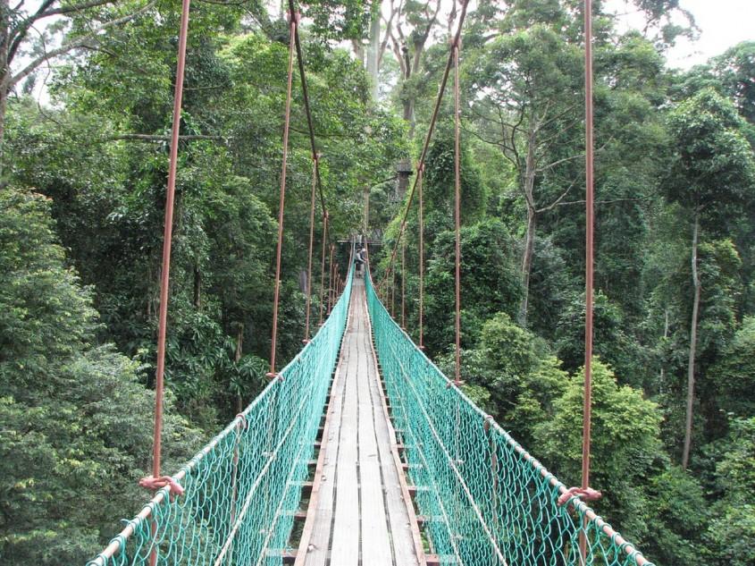 """Valea Danum, Malaezia Construita in Borneo, aceasta platforma este """"prietenoasa"""" cu arborii, pe"""