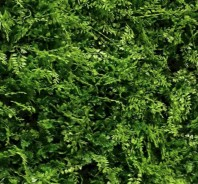 Perete verde artificial - VV 6117 GreenWall small-leaves