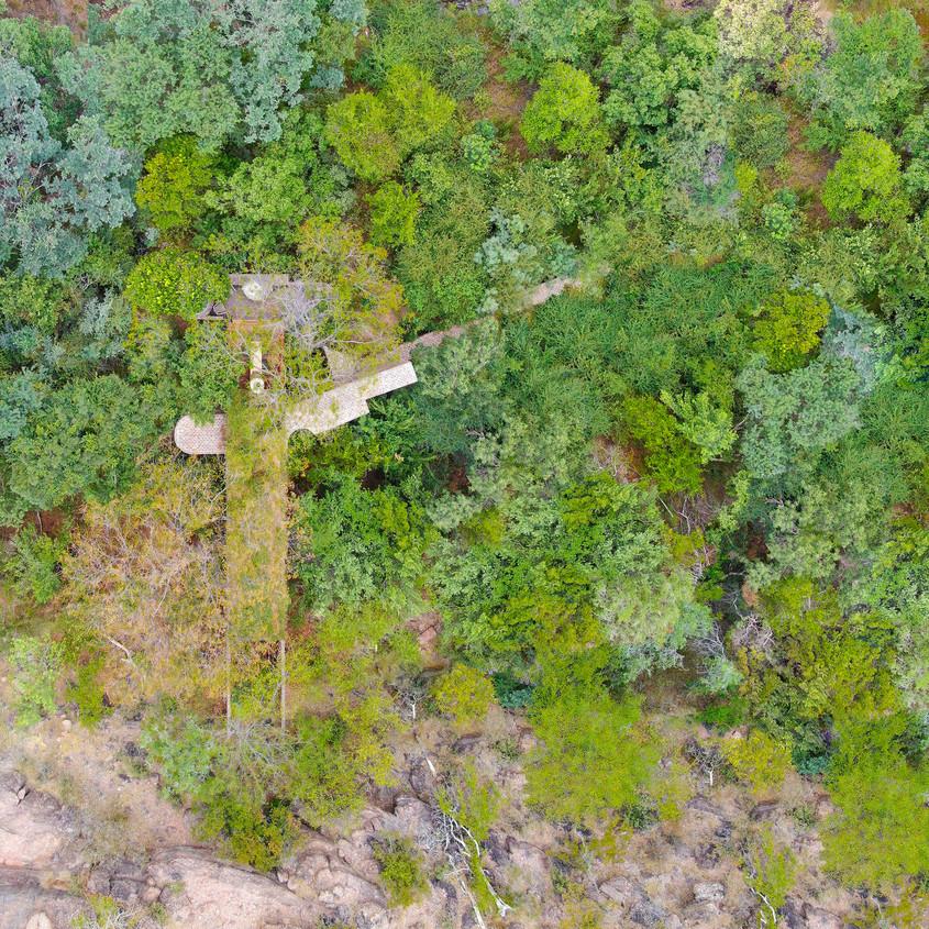 O casă îngustă construită în pădure făra ca niciun arbore să fie tăiat