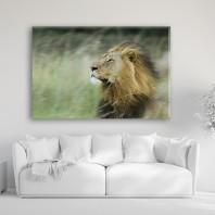 Tablouri Canvas 0126 - Animale