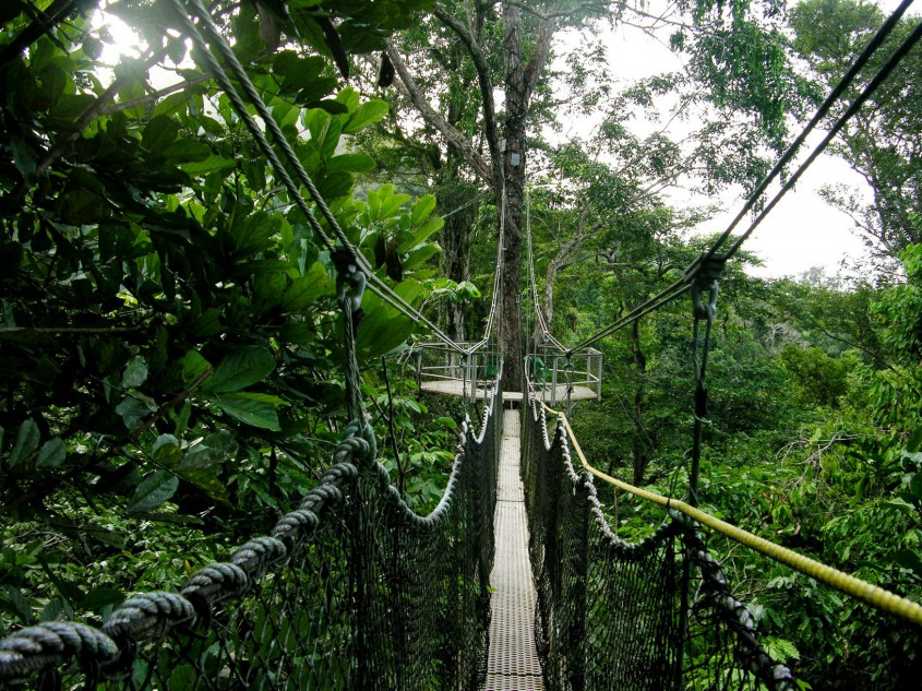 Iwokrama, Guyana Constructia este realizata din elemente ajustabile, astfel incat copacii sa