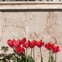 Marmura Rosalia Beige Polisata 60 x 30 x 2cm - MR-1854