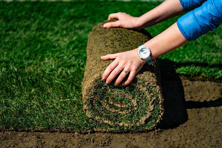 Rulourile de gazon natural, cea mai rapidă soluție de înverzire
