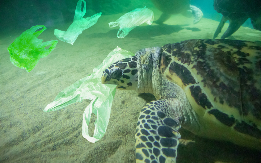 Ghid de reciclare. 8 pași care te vor ajuta să ai un trai mai sustenabil