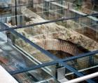 Pardoseala sticla deasupra ruinelor hanului Serban Voda