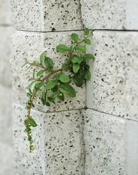Bloc zid de colt - Premium