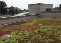 Acoperiș verde extensiv cu retenție de apă