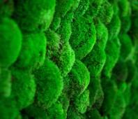 Pereti vegetali GREEN MOOD