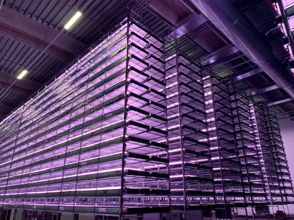 Agricultura viitorului? Una dintre cele mai mari ferme verticale din Europa