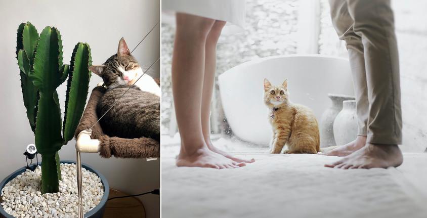 O casă frumoasă pentru tine şi animalul tău de companie