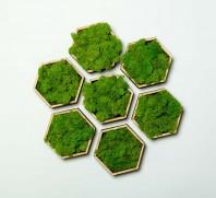 Tablou  cu licheni - Hexagon Set