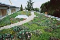 Acoperiș verde intensiv tip grădină ODU GREEN ROOF