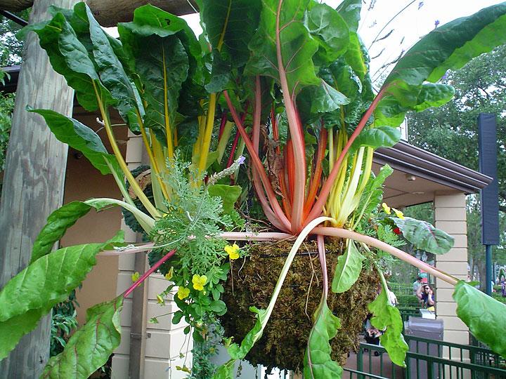 Idei simple pentru grădini de legume la fel de frumoase ca cele de flori