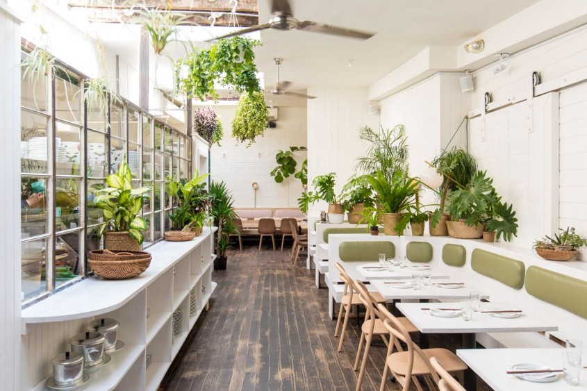 Fitodesignul în restaurante și cafenele