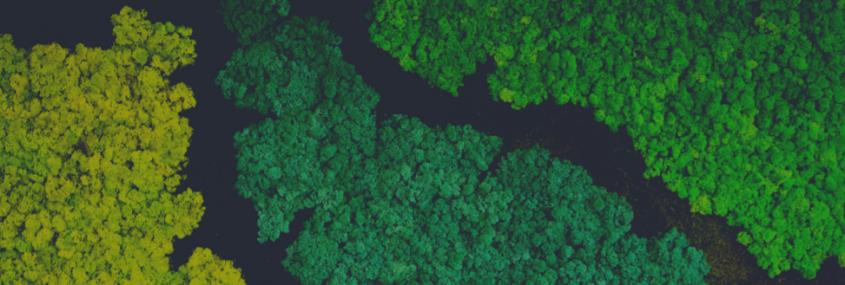 Cum întreții pereții verzi din licheni stabilizați