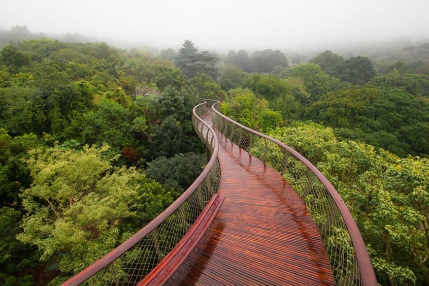 Parcul National Kirstenbosch, Africa de Sud O poteca suspendata, lunga de 130 de metri,