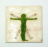Tablou cu licheni - Omul Vitruvian