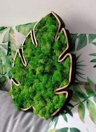 Tablou cu licheni - Frunza Monstera