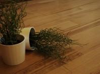 Parchet masiv stejar clasa Extra D (coloratie) nefinisat