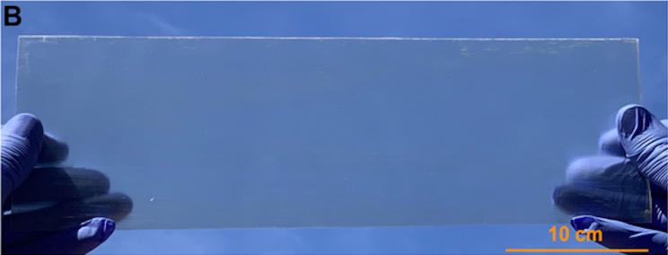 Lemnul transparent ar putea fi materialul viitorului în construcţii
