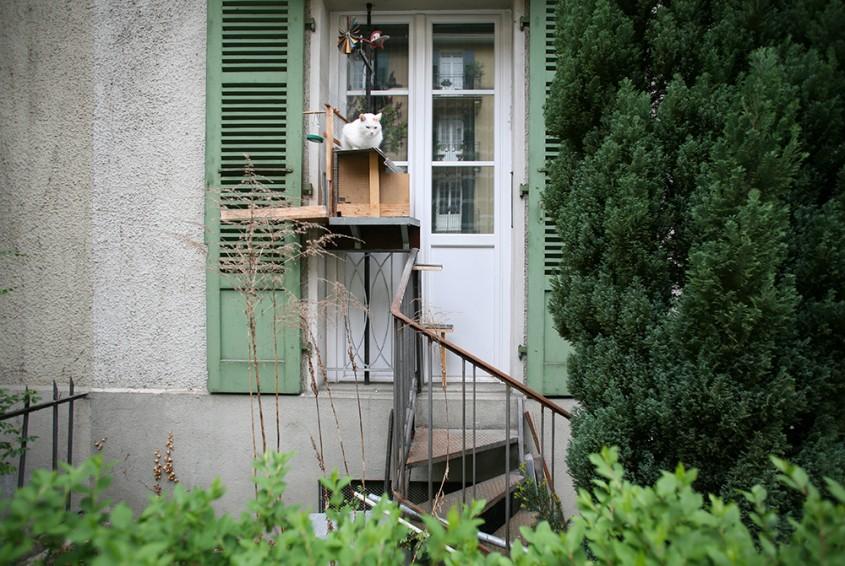 Scările pentru pisici fac parte din arhitectura acestui oraș european (Foto)