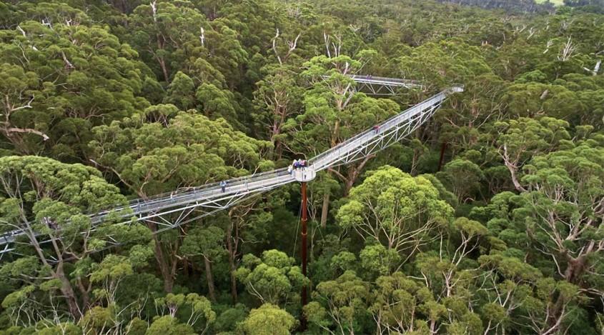 Valea Gigantilor, Australia O astfel de poteca suspendata gasim in Valea Gigantilor din