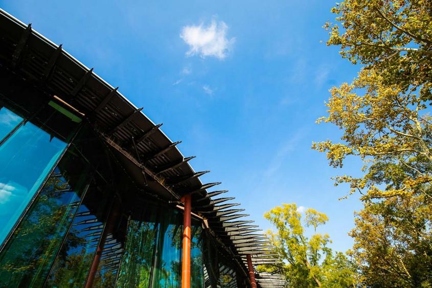 Prin acoperișul edificiului Casa Muzicii Maghiare ies arbori