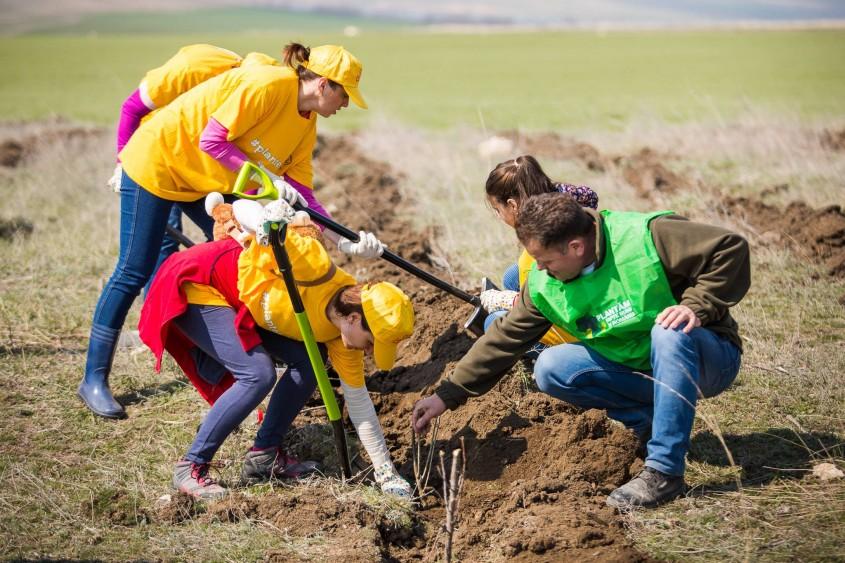 Pădurea CELCO ia naștere în Dobrogea