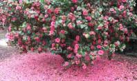 Curiozitati in amenajari exterioare care sunt diferentele dintre un arbust si un tufis Arbust si tufis
