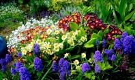 Sfarsitul verii momentul ideal pentru a sadi plante perene! Vara e pe sfarsite asa ca acum