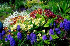Sfarsitul verii: momentul ideal pentru a sadi plante perene!