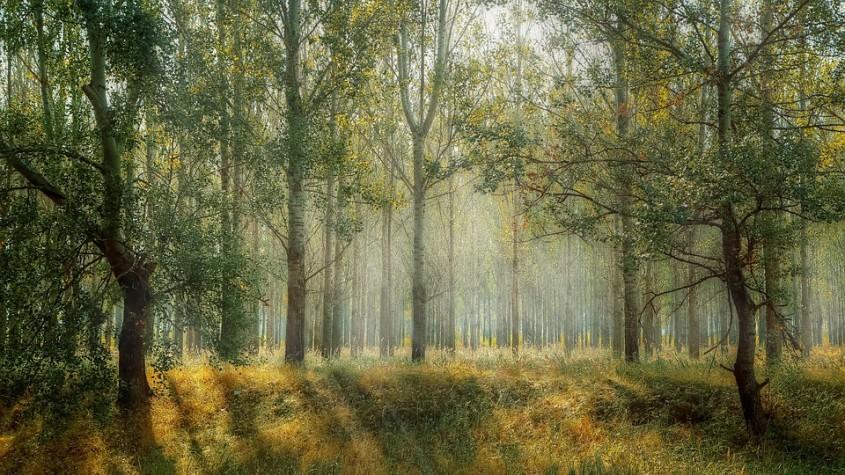 Marș pentru păduri, la București