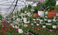 Plante curgătoare pentru balcoane - oaze de culoare și prospețime pentru un sezon întreg In serele
