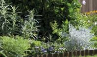 COMPO pentru plante frumoase si gradini elegante! Testeaza pe www hai-la-casa ro! Cu o baza de