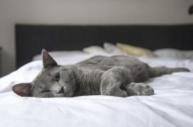5 lucruri din dormitorul tău care îți fac rău fără să știi, potrivit unui designer de interior