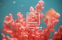 La revedere, Ultra Violet! Pantone tocmai a anunțat culoarea anului 2019 Culoarea anului 2019 este Living Coral (Pantone 16-1546), anunta Institutul Pantone, o nuanta de corai perlat vibranta, dar in acelasi timp delicata, inspirata