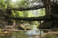Podurile din rădăcini din India, minuni inginerești în parteneriat om-natură