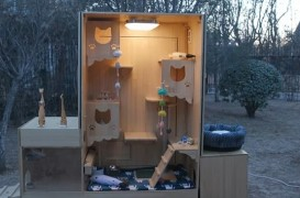 Un adăpost smart în care pisicile fără stăpân găsesc hrană și pot sta la căldură