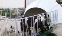 1st Criber sustine zootehnia de calitate Agricultura romaneasca a dovedit in ultimii ani ca este o
