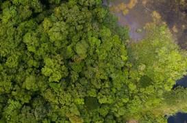 Una dintre cele mai mari păduri tropicale din lume este protejată